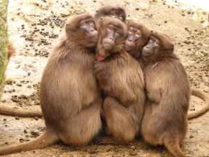 five monkey huddled together outdoor during daytime